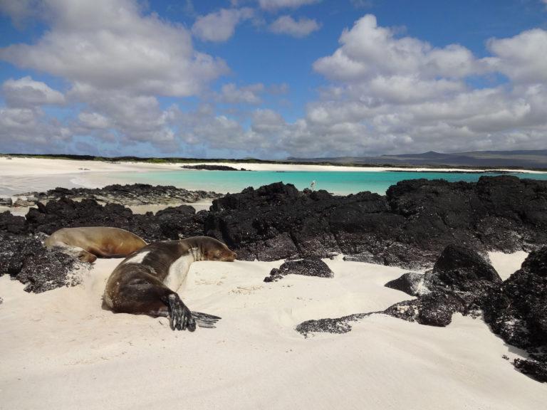 Les gala, les gala, les Galapagos